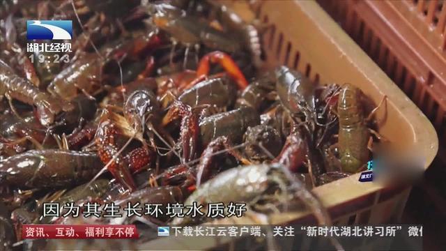 清水虾煮多久
