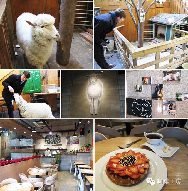 韩国各种特色的咖啡厅,开家自己风格的咖啡馆