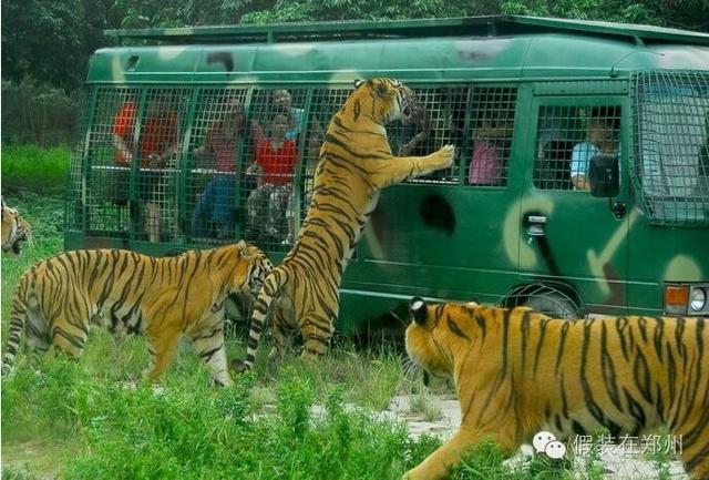 郑州雁鸣湖野生动物园有限责任公司: 综合旅... _亿美建筑资讯网