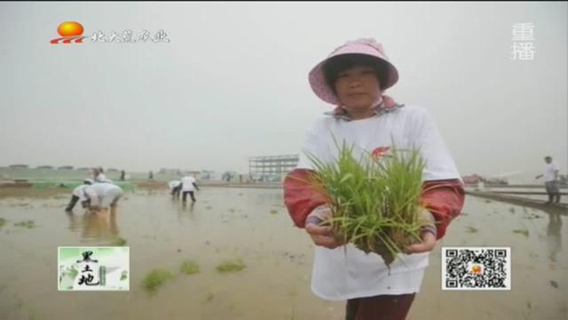 沙漠也能种出水稻!袁隆平团队海水稻迪拜试种成功,将在中东推广