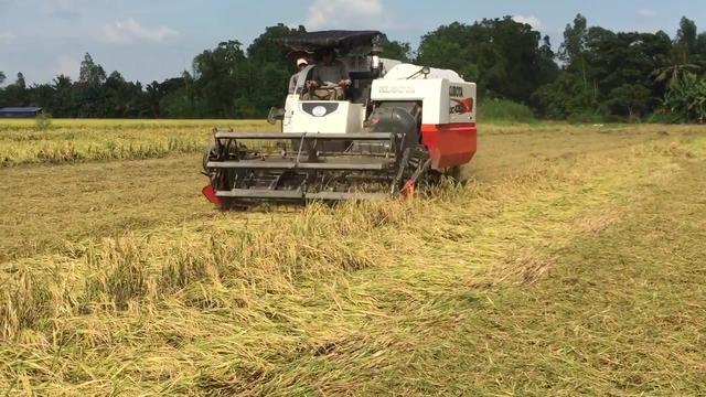 履带式小型收割机,收割水稻吸引多人观看,山区农民的好帮手
