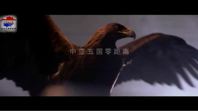 高山是家园,天空是乐土,中亚五国最具特色的鹰之歌舞