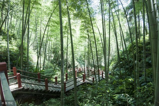 竹海森林公园 - 竹海森林公园介绍、电话、地址、周边景点 - 飞猪