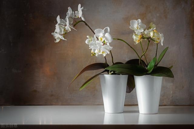 常见100种花卉