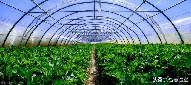 在农村建一亩地蔬菜温室大棚造价大概需要多少钱?