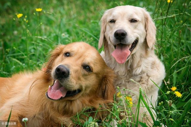公狗和母狗的性格有哪些不同? - 哔哩哔哩