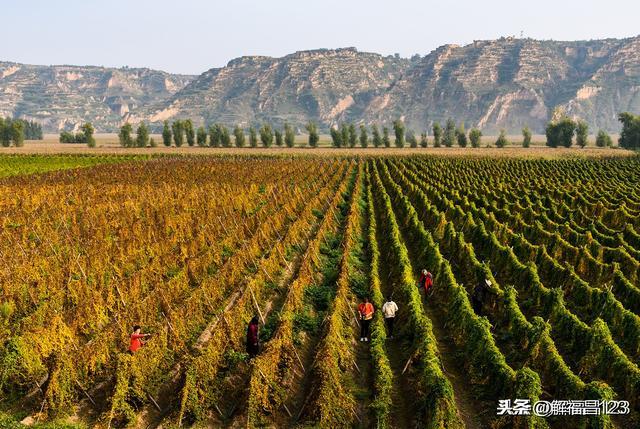 秋天的農村圖片
