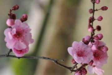 供应形状奇特 桃梅树桩盆景 中小型造型多样_阿里巴巴