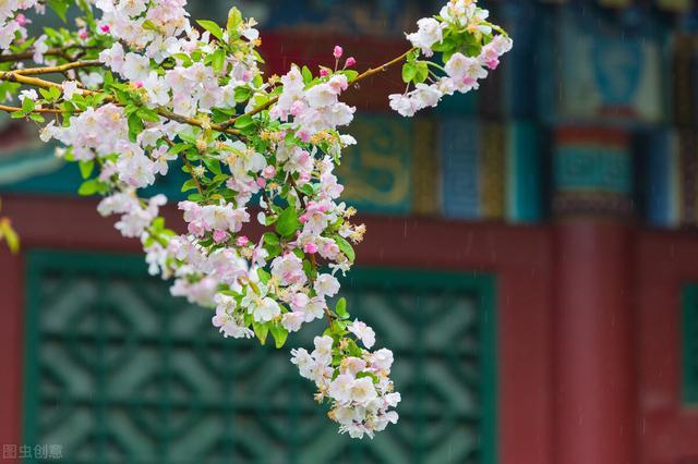 春季养生常识图片