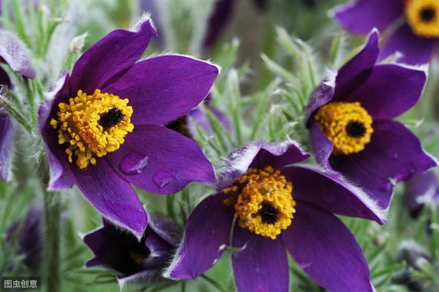 农村常见的50种野花