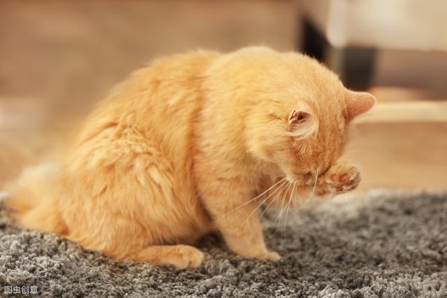 猫用头蹭你代表着什么-第3张图片-IT新视野