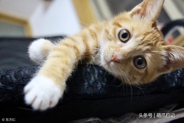 小猫的猫藓怎么治疗