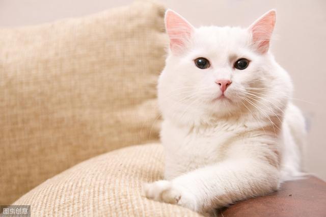 猫猫兔多少钱一只? - 市场价格 - 黔农网
