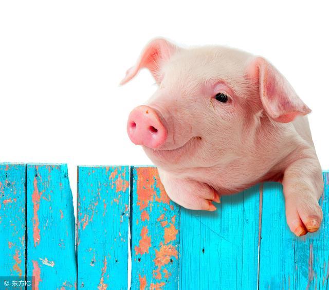 200头猪舍设计图