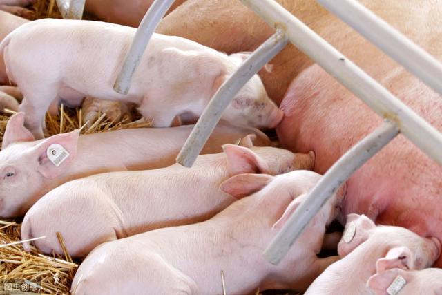 母猪产床尺寸设计图