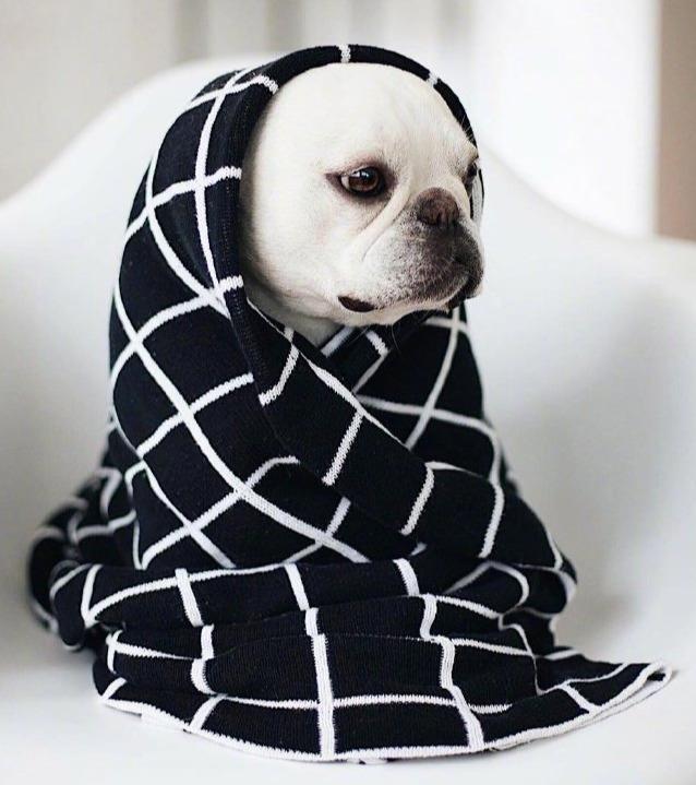 冬天到了不想起床,快点裹紧我的小被被,继续睡