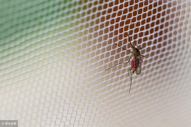 世界上真的有抗寒蚊子吗? 我家里的室温是8摄左右然后最近好...