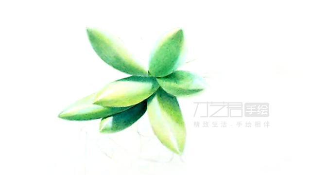 适合初学者学习的彩铅多肉植物画法,一起来临摹吧!
