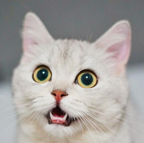 萌宠图片大全可爱小猫