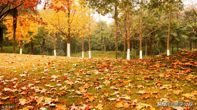 100首秋天的诗,所有的秋景秋绪都在这里