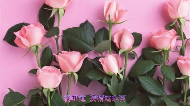 远古视频,许嵩在大学晚会上献唱《玫瑰花的葬礼》