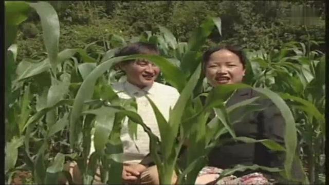 贵州山歌—包谷地里对山歌,牛牛牛!_网易视频