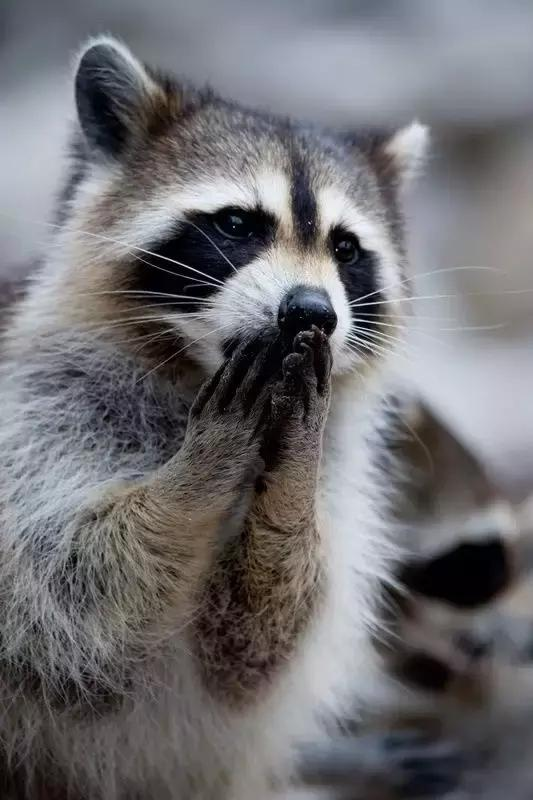 小浣熊在哪里買