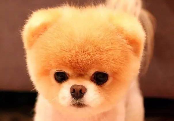 世界上最萌最可爱的20只小狗!