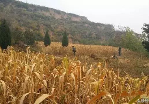 農村秋天的圖片