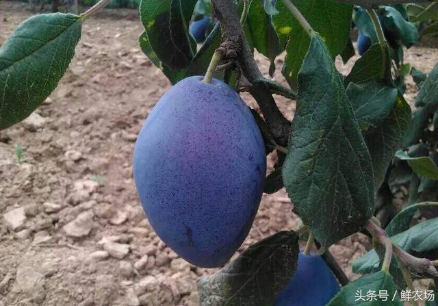 快收藏!这十几种常见的水果,你真的吃对了吗?