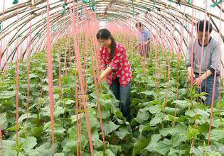 2020年蔬菜大棚造价每亩多少钱 2020年蔬菜行业发... -手机中研网