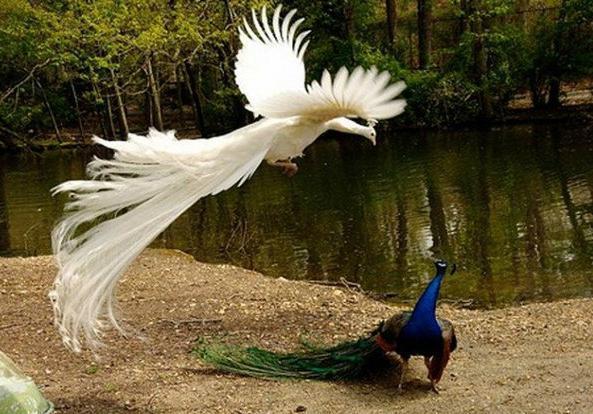 羽毛装饰画的寓意