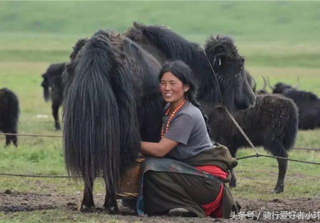 川藏线旅行看到藏族妹子蹲在地上,对你微笑,为什么不能搭讪?