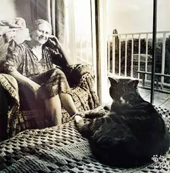 莱辛,特别的猫(多丽丝·莱辛)