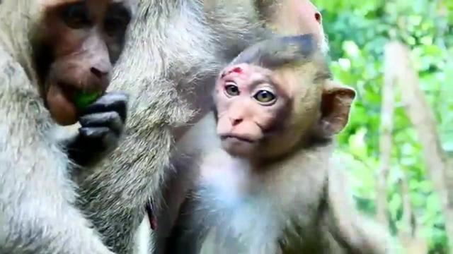 猴子讨食遭扔炮仗炸断手指 网友大骂没人性(图)-评论-海外网