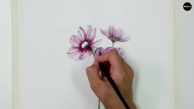 初学水彩画花卉高清