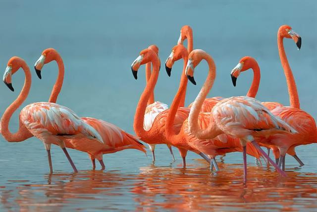 鸟类图片大全带鸟名
