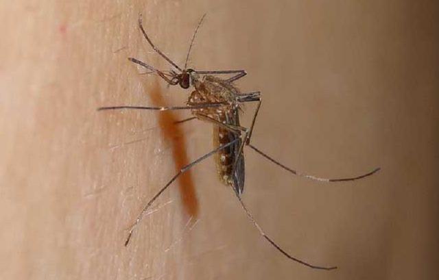 蚊虫叮咬、湿疹抓挠不止?止痒妙招看这里