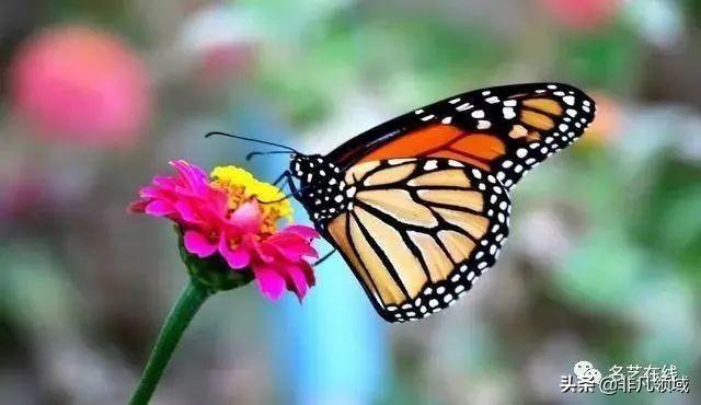 蝴蝶的翅膀原来结构这么复杂,小伙子真是看到了神奇的世界