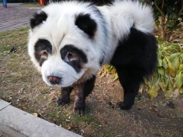 熊猫头像可爱卡通图片
