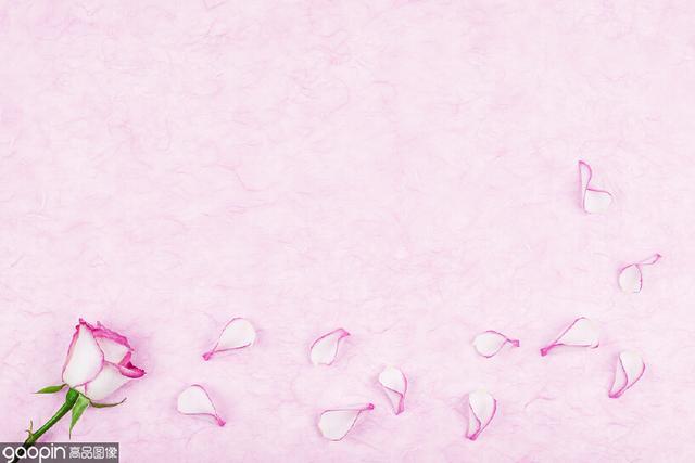 一朵花高清手机壁纸