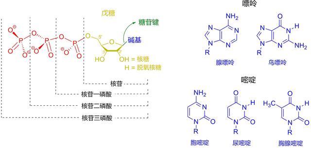 丙硫氧嘧啶片图片