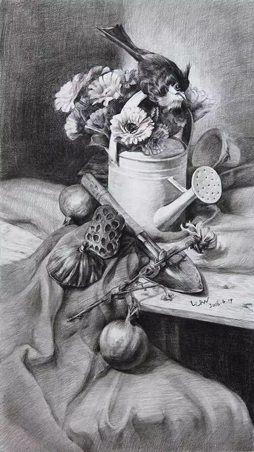 素描花朵图片玫瑰
