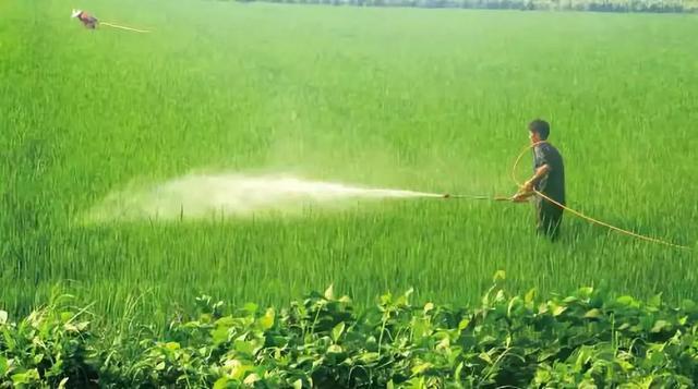 鳞翅害虫杀虫剂对比:甲维盐、虫螨腈、茚虫威、虫酰肼、虱螨脲