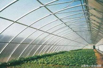 7种常见蔬菜大棚造价说明!想建大棚农户不重视,等着花钱吧!