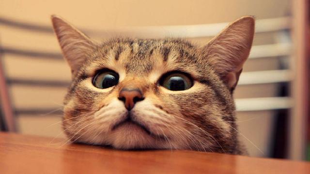 猫咪常见体内寄生虫有哪些?_手机搜狐网