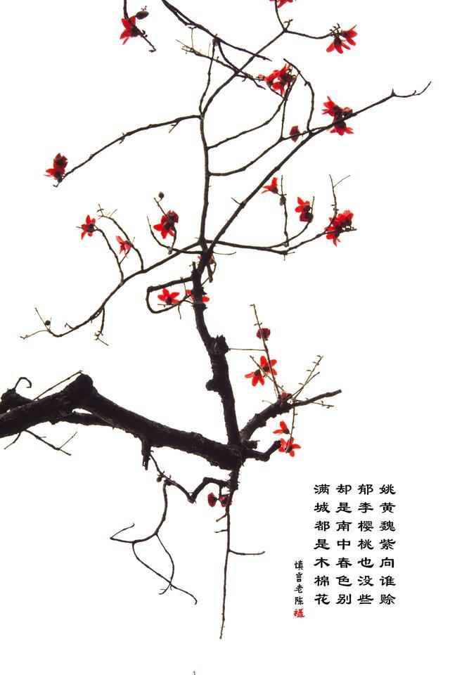 画意红棉(广州最漂亮的木棉树)