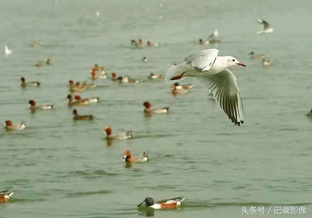 海鸟飞翔图片_图片_红动手机版