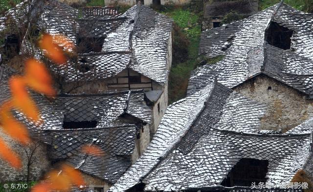 贵州山上野果图片大全