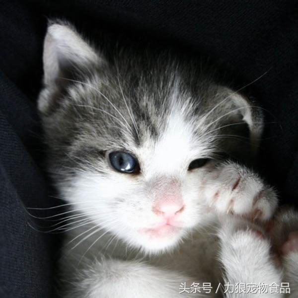 萌猫咪好看图片_超可爱喵星人_可爱图片_精品库